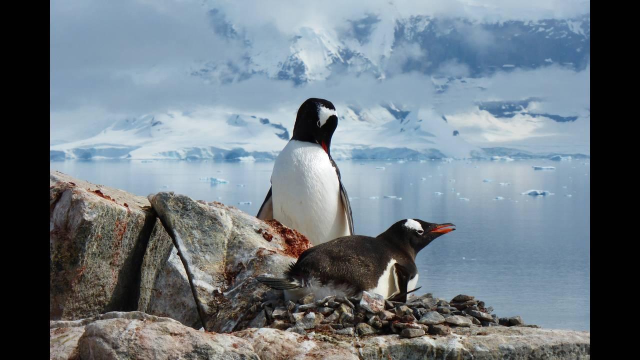 https://cdn.cnngreece.gr/media/news/2019/07/17/184670/photos/snapshot/penguins-1999068_1920.jpg