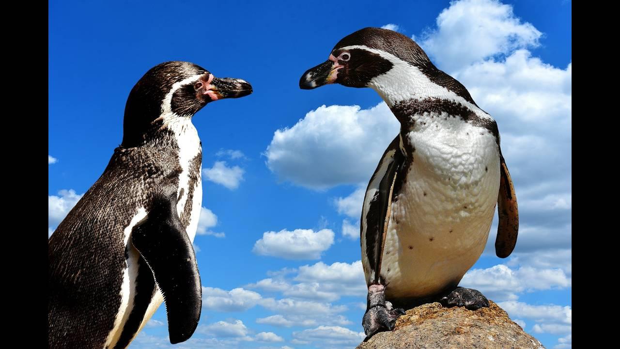 https://cdn.cnngreece.gr/media/news/2019/07/17/184670/photos/snapshot/penguins-2746468_1920.jpg
