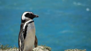 Πειναλέοι και επίμονοι: Πιγκουίνοι διέρρηξαν εστιατόριο για να... φάνε σούσι