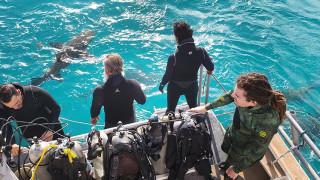 Τζερεμάια Σάλιβαν: Ο άνθρωπος που θέλει να τον δαγκώνουν... καρχαρίες (pics&vid)