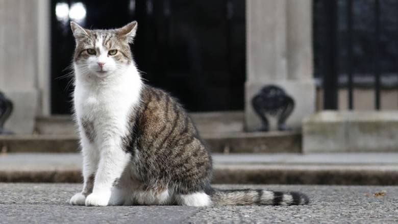 Βρετανία: Ο Λάρι, ο πρωθυπουργικός γάτος, αποκτά τετράποδη συντροφιά με εντολή Τζόνσον