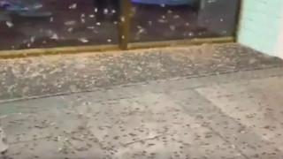 Ανατριχιαστικοί... επισκέπτες: Επιδρομή από εκατομμύρια ακρίδες στη Νεβάδα