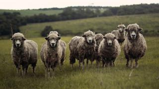 «Πρόβατα θέλουν να φάνε τα παιδιά μου»: Ένα… διαφορετικό τηλεφώνημα στην αστυνομία στη Βρετανία