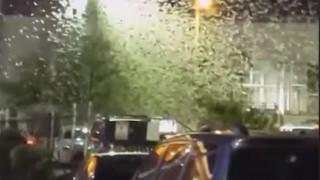 Συνεχίζεται η «επιδρομή» στο Λας Βέγκας: Βίντεο ακατάλληλα για όσους φοβούνται τις ακρίδες