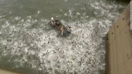 Γιατί στο Κεντάκι «χτυπούν» με ρεύμα κοπάδια κυπρίνων
