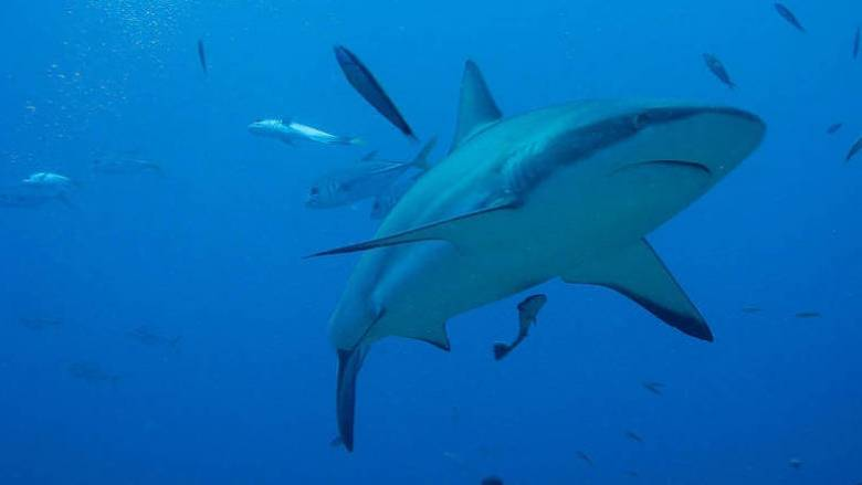Φλόριντα: Τρεις επιθέσεις καρχαριών στην ίδια παραλία μέσα σε 24 ώρες