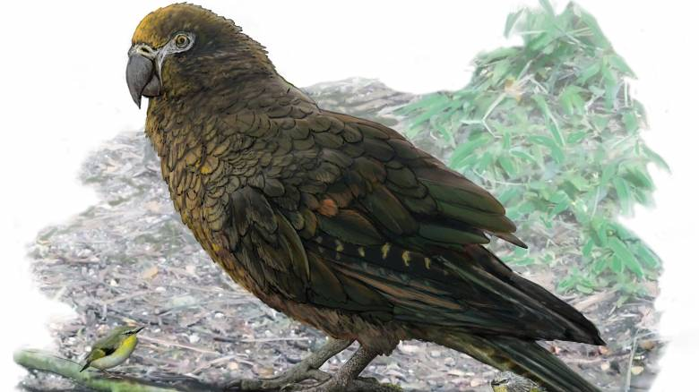 «Ο Ηρακλής ο απρόσμενος»: Ανακαλύφθηκε ο μεγαλύτερος παπαγάλος που έζησε ποτέ