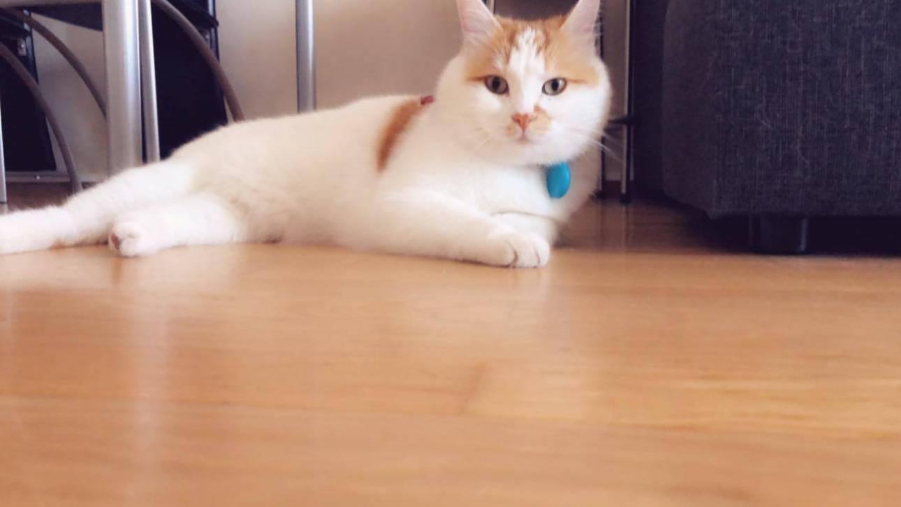 Παγκόσμια Ημέρα Γάτας: Ο ...Σύρος γάτος πρόσφυγας της Ειδομένης ζει πλέον ξέγνοιαστος στη Σουηδία