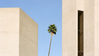 «Ένα δέντρο μεγαλώνει»: Ένα φωτογραφικό πρότζεκτ για τη φύση που βρίσκει πάντα το δρόμο της