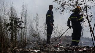 Θεσσαλονίκη: Υπό μερικό έλεγχο η πυρκαγιά στους Ελαιώνες Πυλαίας