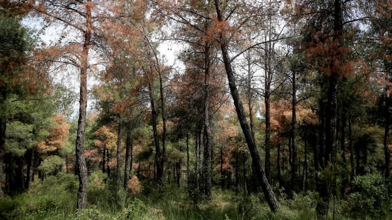 Θεσσαλονίκη: Κλείνει προληπτικά το δάσος του Σέιχ Σου μέχρι την Τρίτη