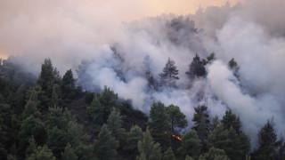 «Κόκκινος» συναγερμός για πυρκαγιές σήμερα – 58 φωτιές σε δάση το Σάββατο