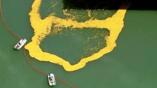 Γιατί πλημμύρισαν το ποτάμι του Σικάγο 60.000 πλαστικά παπάκια;