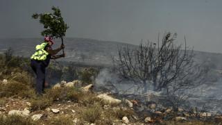 Σε ύφεση η φωτιά στην Ελαφόνησο: Μεγάλη οικολογική καταστροφή