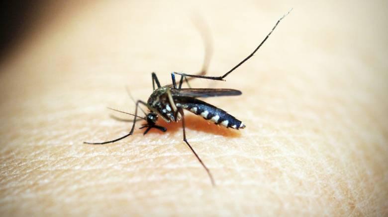 Ο ιός του Δυτικού Νείλου, η κλιματική αλλαγή και τα λοιμώδη νοσήματα
