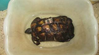 Φωτιά Υμηττός: Η πανίδα θύμα της μεγάλης πυρκαγιάς - Κάηκαν πολλές χελώνες