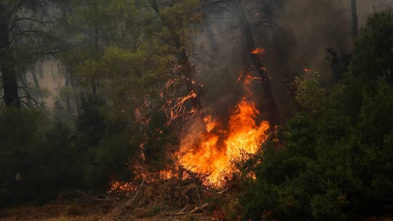Ανεξέλεγκτη η πυρκαγιά στην Εύβοια: Εκκενώνονται χωριά