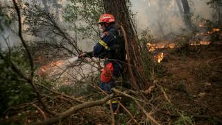 Πυρκαγιά και στην Ηλεία