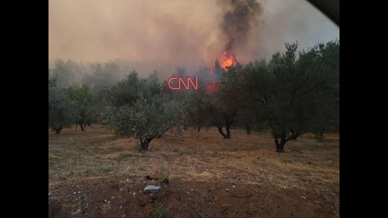 https://cdn.cnngreece.gr/media/news/2019/08/13/187445/photos/snapshot/67910350_371502523547396_5214067534017331200_n.jpg