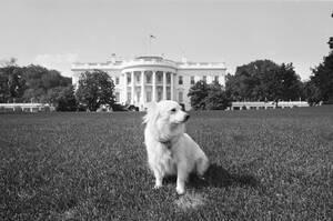 1963, Ουάσινγκτον. Η Πουσίνκα, δώρο στον Πρόεδρο Κένεντι από τον Σοβιετικό ηγέτη Νικίτα Χρουτσόφ, στον κήπο του Λευκού Οίκου. Η Πουσίνκα είναι κόρη της διαστημικής σκυλίτσας Στέλκα.