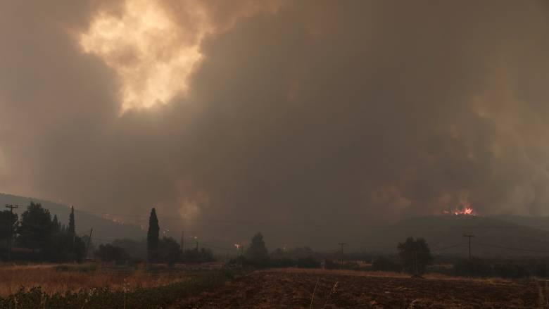 Φωτιά στην Εύβοια: Προσαγωγή υπόπτου για την πυρκαγιά στην Ιστιαία