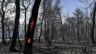 Φωτιά Εύβοια - Στάχτη και αποκαΐδια: Τεράστια οικολογική καταστροφή