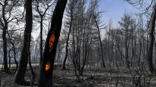 Φωτιά – Εύβοια: Συνεχίζεται η μάχη με τις φλόγες – Στάχτη χιλιάδες στρέμματα