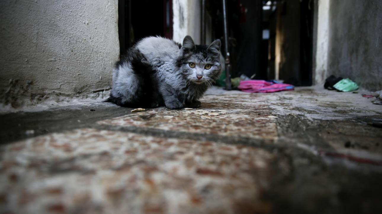 Ο Σύρος που διασώζει γάτες από τα χαλάσματα