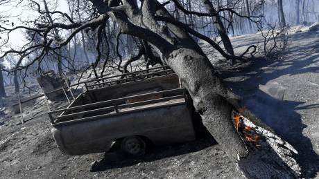 Φωτιά στην Εύβοια: Υποψίες για εμπρησμό - Τι δείχνουν τα πρώτα στοιχεία (vid)