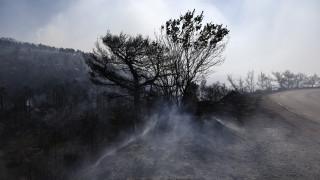 Φωτιά στην Εύβοια - Τεράστια οικολογική καταστροφή: Στάχτη 22.680 στρέμματα