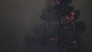 Φωτιά Εύβοια: Καλύτερη η εικόνα - Τρεις ύποπτοι για εμπρησμό