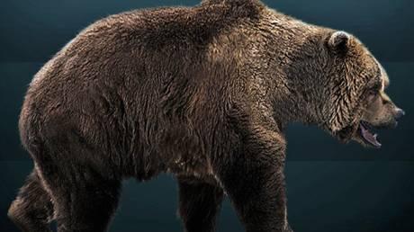 Οι άνθρωποι εξαφάνισαν τις αρκούδες των σπηλαίων πριν 24.000 χρόνια