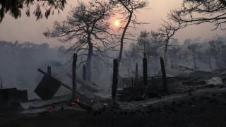 Στάχτη 23.000 στρέμματα στην Εύβοια: Τα στοιχεία που «δείχνουν» εμπρησμό