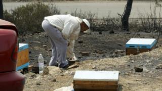 Φωτιά στην Εύβοια: Πότε θα αποζημιωθούν οι αγρότες