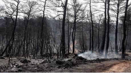 Τι κάηκε στην Εύβοια - Η υπηρεσία Copernicus καταγράφει δορυφορικά την καταστροφή