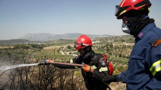Ιωάννινα: Φωτιά ξέσπασε σε αγροτική περιοχή