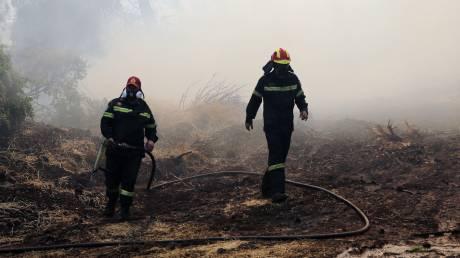 Φωτιά Εύβοια: Το προφίλ του εμπρηστή, η άρση τηλεφωνικού απορρήτου και η καταστροφή