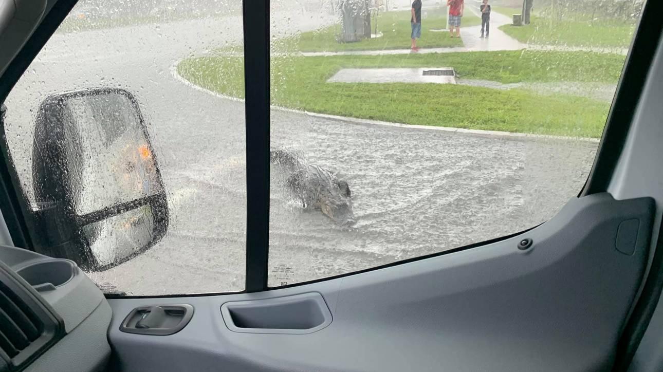 Σκαρφαλώνουν φράχτες, κολυμπούν στους δρόμους: Οι αλιγάτορες είναι παντού στη Φλόριντα