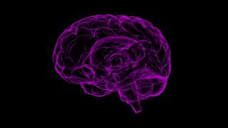 Έρευνα του ΙΤΕ ανατρέπει θεωρία για τα εγκεφαλικά κύτταρα
