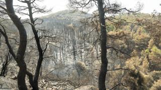 Φωτιά στην Εύβοια: Τι υποστηρίζει ο βασικός ύποπτος