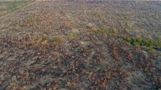 Πρωτοφανής δήλωση Μπολσονάρου: Οι ΜΚΟ βάζουν φωτιές στον Αμαζόνιο