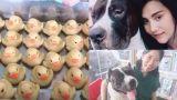 Κι όμως συνέβη: Έβγαλαν από το στομάχι σκύλου… 32 πλαστικά παπάκια