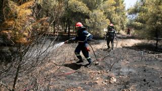 Συναγερμός στην Πυροσβεστική: Έξι πύρινα μέτωπα σε εξέλιξη