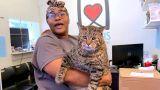 Παχουλός γάτος αναζητεί οικογένεια και γίνεται viral