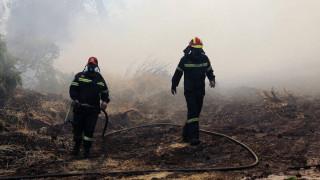 Φωτιά σε δασική έκταση στα Ιωάννινα