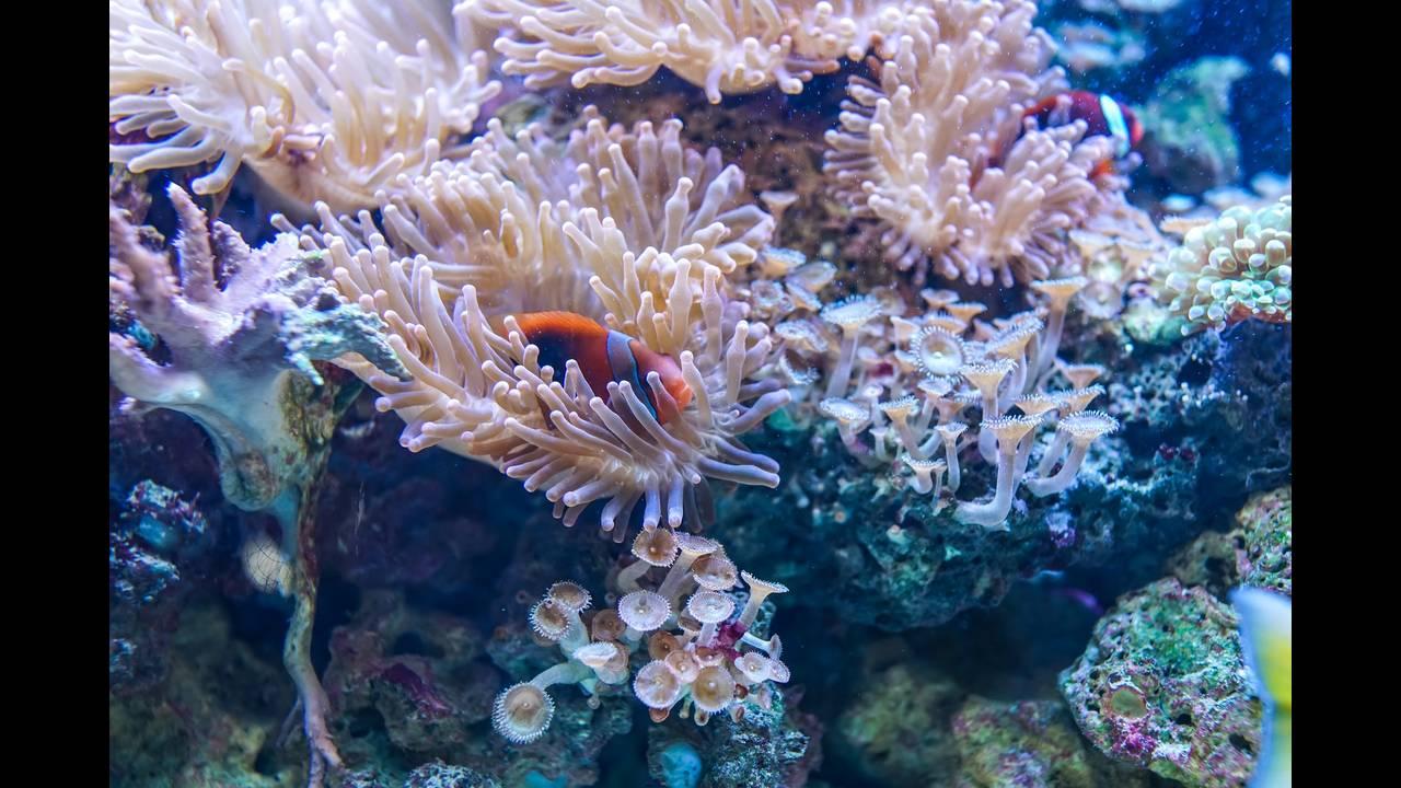 https://cdn.cnngreece.gr/media/news/2019/08/26/188635/photos/snapshot/underwater-3250644_1920.jpg