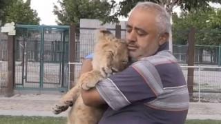 Λιονταράκι απορρίφθηκε από τη μητέρα του, αλλά βρήκε την αγάπη στο πρόσωπο ενός ανθρώπου