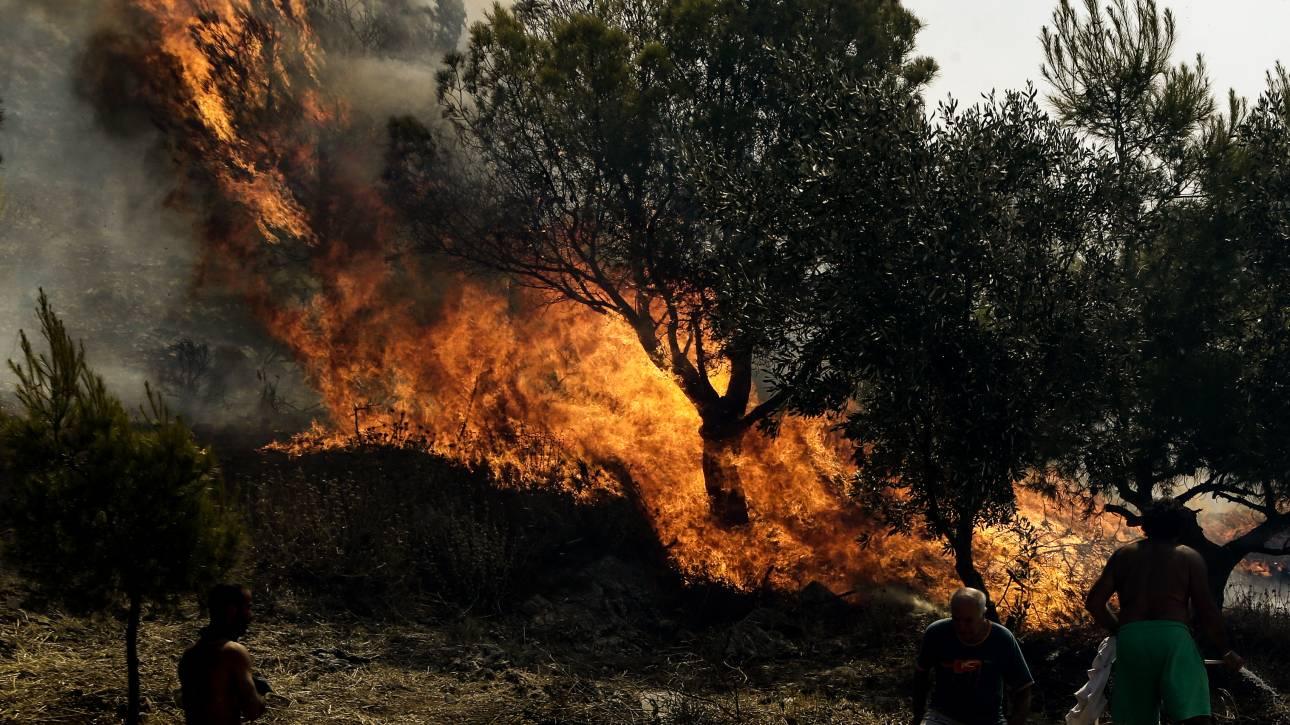 Μεγάλη φωτιά στην Αλεξανδρούπολη