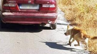 Κρήτη: Συνελήφθη ο 73χρονος που έσερνε σκύλο με το αυτοκίνητό του