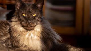 Vivo: Η γάτα με τους χιλιάδες followers που έχει τρελάνει το Instagram